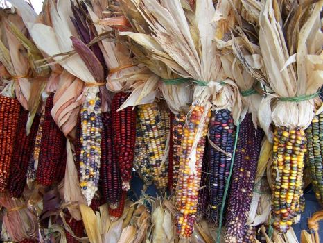 The Beautiful Hues of Indian Corn