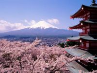 Blossoms and Mt. Fuji