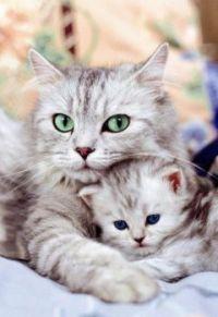 protecting kitten