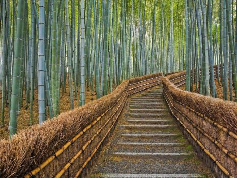 Path Through Bamboo