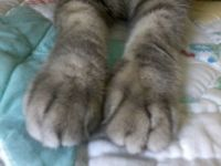 perfect paws