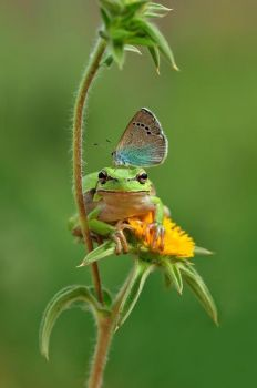 The frog and the butterfly.