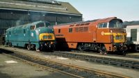D821 and D1013