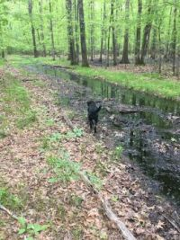 Stella on the flooded woods trail.