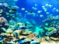 Australian reef