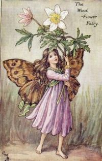 Wind Flower Fairy   vintage, 1920's   Cicely Mary Barker