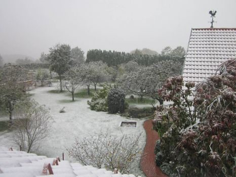 My cousin's backyard in Germany