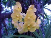 N. Orleans botanical garden by Martha M. (1)