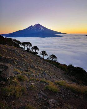 National Park Counguillio, La Araucanía, Chile  4111