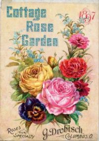 Cottage Rose Garden