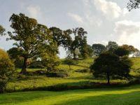 Saltram Woods