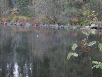 Misty lake in the rain
