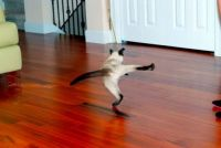 """Waxing the floor always made Kitty do her """"Give 'em the old Razzle Dazzle"""" routine..."""