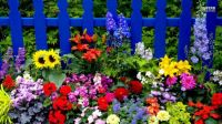 multicolored-summer-flowers