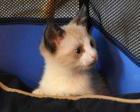 Foster kitten #4