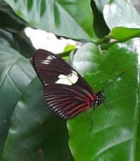 Butterfly with White Spot