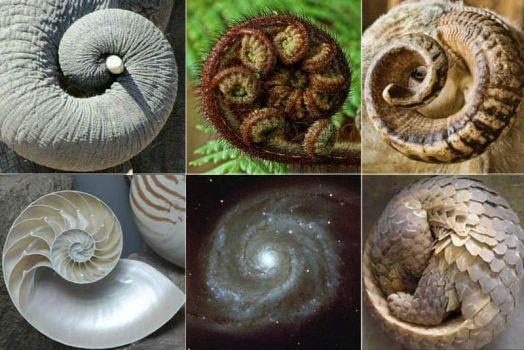 Fibonacci Sequence in Nature 2 of 4