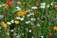 Cvetoče poletje