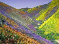 Hills in Iran