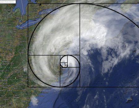 Fibonacci Sequence in Nature 4 of 4