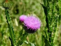 """""""Weeds are flowers too, once you get to know them."""" --A. A. Milne"""
