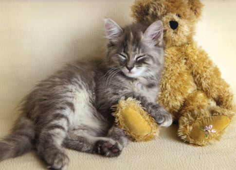Me and my Teddy