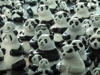 Panda, panda, panda....