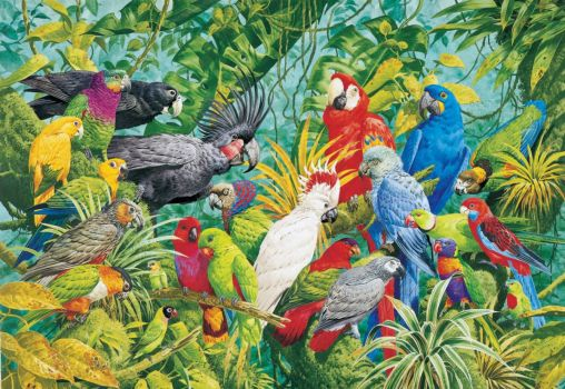Rainforest parrots!!