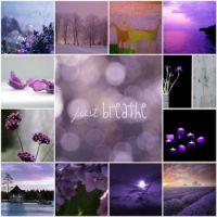 purple lawendula flickr