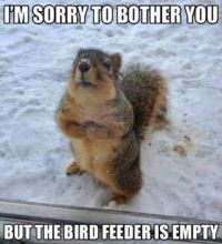 Very cute, I think our squirrels would do this if they could!