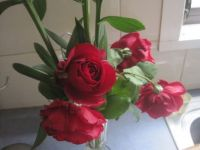 red roses from neighbour