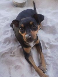 Bella Investigating Sandbox