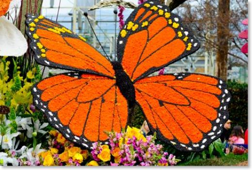 Rose Bowl Parade Float Butterfly