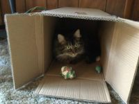 Kit Cat loves his new bed and wrapping paper balls