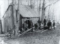 "Men and boys involved in ""sugaring off"", in 1895."