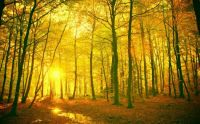 8379-forest-mystical-wallpaper-wallpapers