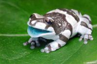 Hey Frog
