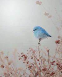 Klein blauw vogeltje.