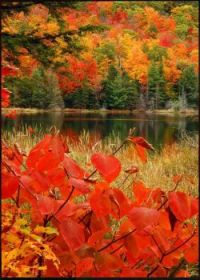 Lac Fortune, Gatineau Park, Quebec, just outside Ottawa, Canada