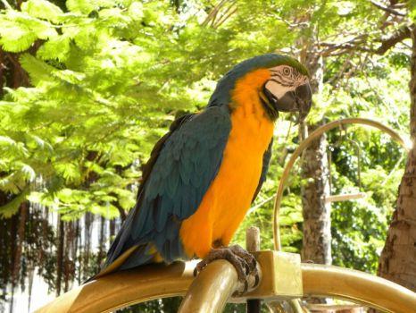 Parrot at Hawaiian Hotel