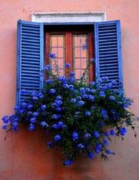 Blue Shutters and Windowbox
