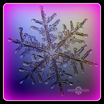 The perfect Snowflake captured by Marion Owen