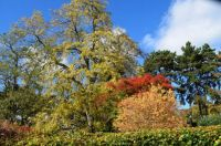 Autumn, Brinton Park, Kidderminster