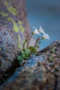 wild flower russia