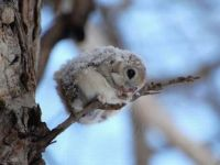 What a cold little one! Does anyone know what it is? Maybe it's a type of flying squirrel?