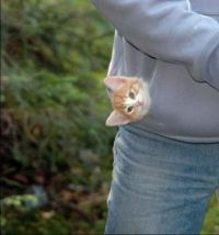 Pocket Kitty