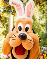 Pluto Easter
