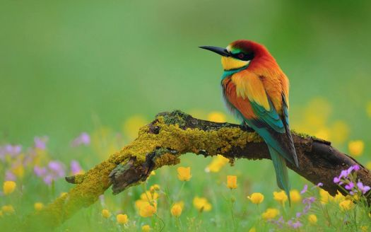 bird-and-flower