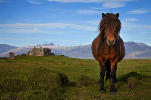 Iceland, A Horse and a Castle