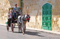 Maltese cab